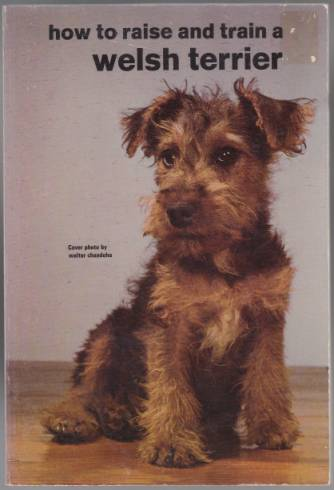 Image for How to Raise and Train a Welsh Terrier