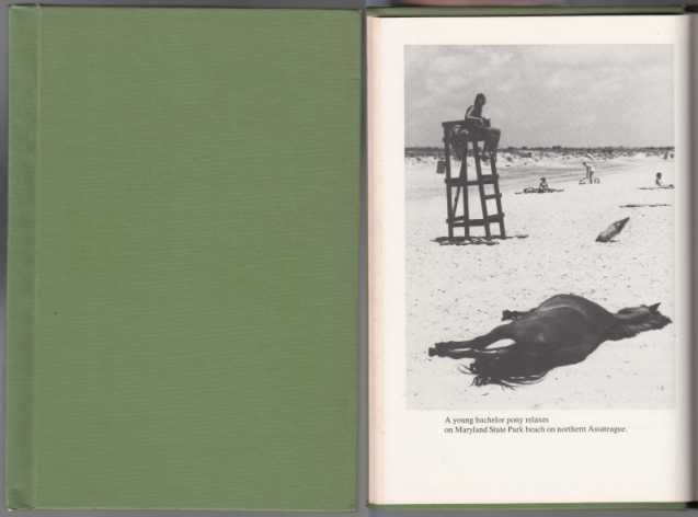 Image for The Island Ponies  An Environmental Study of Their Life on Assateague