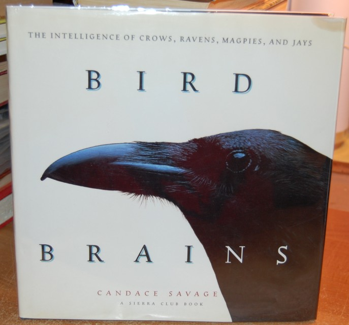 Image for Bird Brains  The Intelligence of Crows, Ravens, Magpies, and Jays  A Sierra Club Book